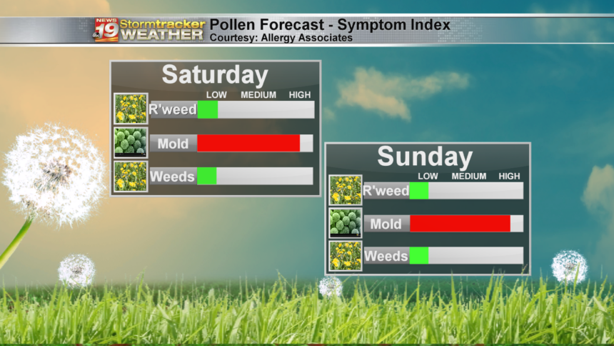 Allergy Forecast
