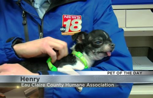 Pet of the Day; Henry