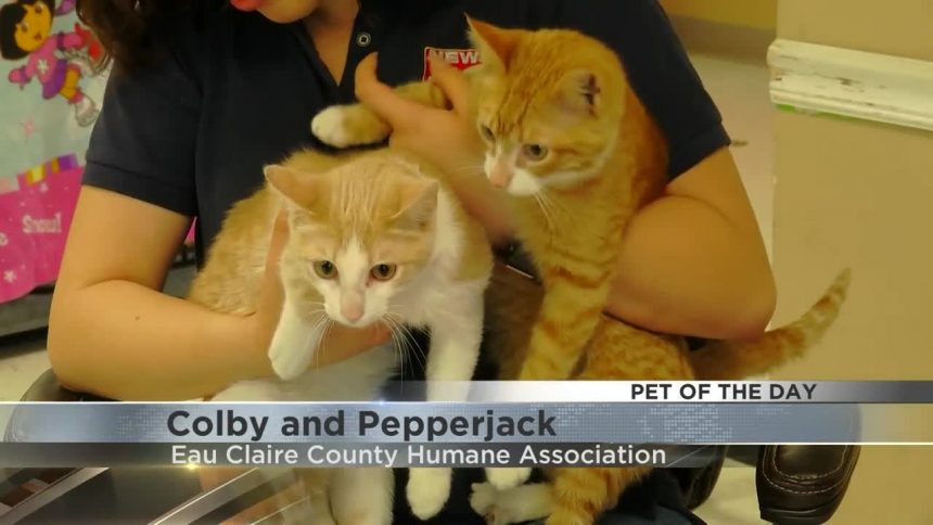 colby and pepper jack
