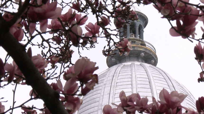 Spring Capitol Flowers