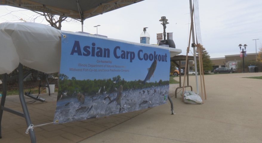 Asian Carp taste testing pushes new perspective on the invasive species