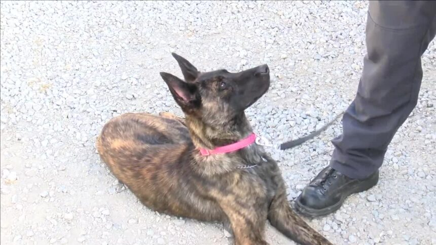 Huntington County Sheriff's Department welcomes new K-9 who's making history