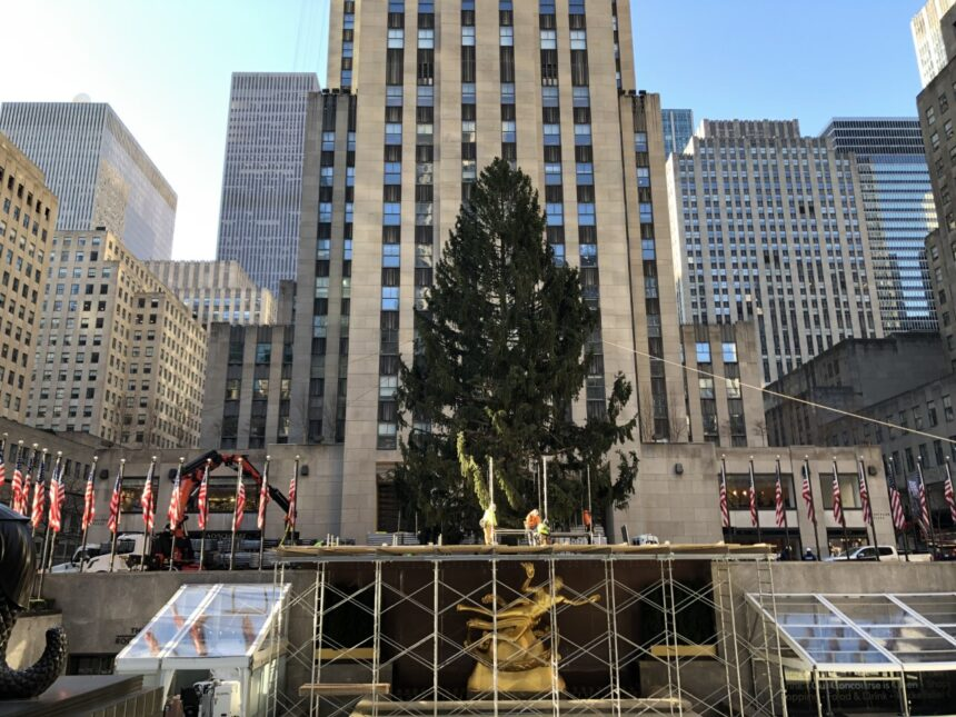 rockefeller center christmas tree donated from oneonta is up in manhattan rockefeller center christmas tree