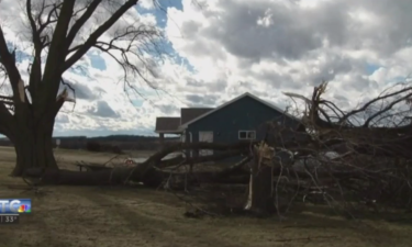 trees torn down by storm near home