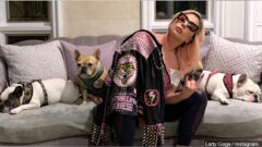 lady gaga with dogs