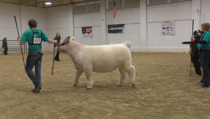 Beef show participants at Mower County Fairgrounds