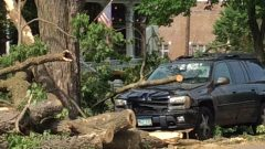 Tree debris after storm in Red Wing.