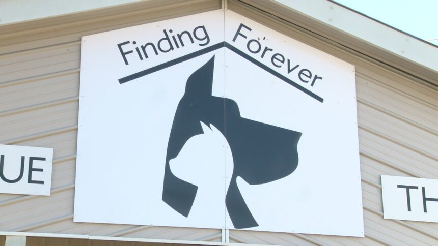 Finding Forever Web Pic