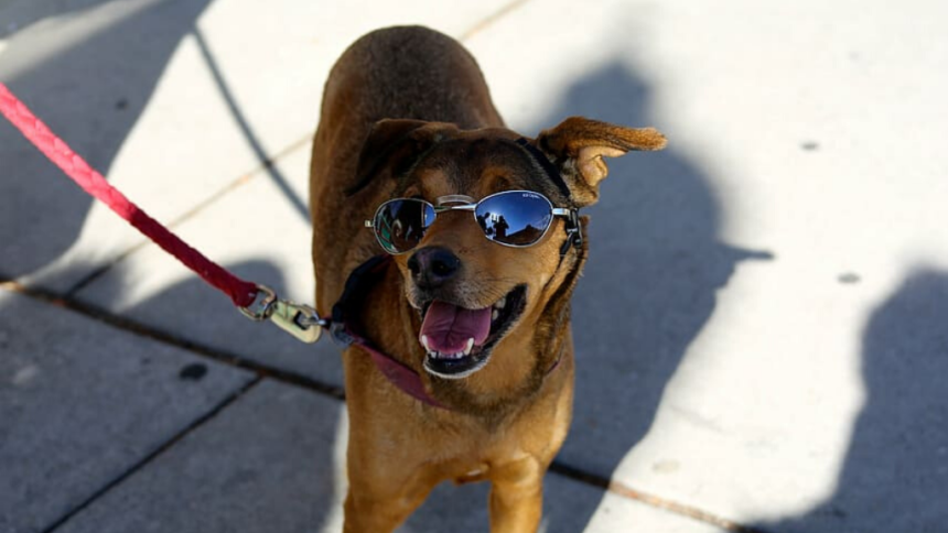 Caring for your dogs in Southern Arizona's extreme heat