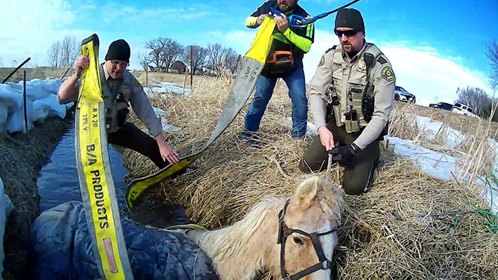 Plymouth County Horse Rescue 4