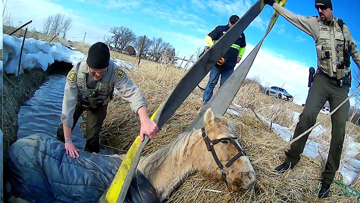 Plymouth County Horse Rescue 5