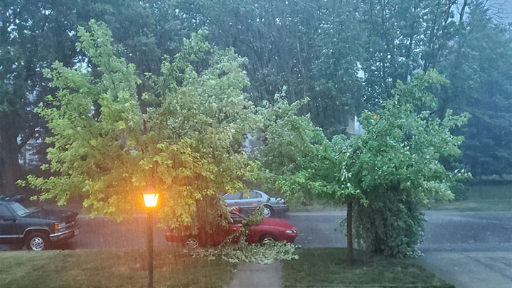 Two trees damages in Monday night storm in Sioux City, courtesy Cecilia Carlson