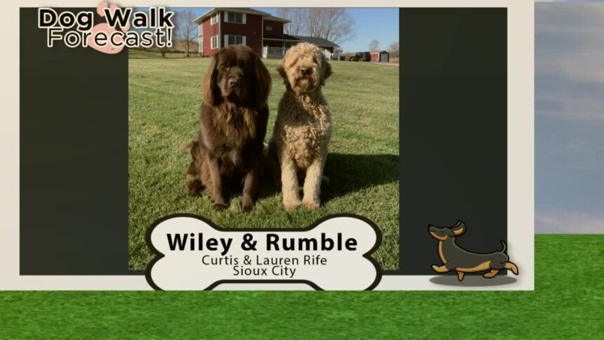 Wiley And Rumble
