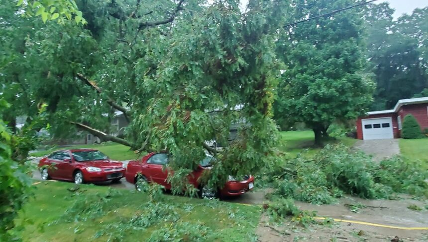 Trees down in Mineral Point -- Laura Lee Reinke